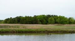 Marsh across Cheesequake Creek (Dendroica cerulea) Tags: creek newjersey spring stream nj wetlands marsh saltmarsh matawan cheesequakestatepark middlesexcounty cheesequakecreek