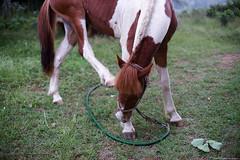 Horse (iweatherman) Tags: horse jeju  jejudo    jejuisland