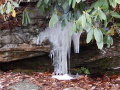 DSCN3702 (shelly_tichy) Tags: frosty february ohiopyle