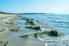 little Java (Diana Knjazeva) Tags: blue sea sun beach nature sand nikon estonia waves algae mm 1855 eesti vna jesuu d3300