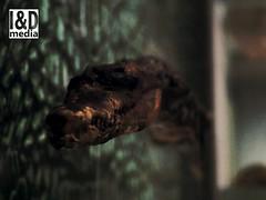 Croc_4 (Internet & Digital) Tags: cats ancient god hawk victorian egypt ibis horus ritual mummy isis sacrifice osirus ancientegypt offerings mummified thoth mummifiedcats