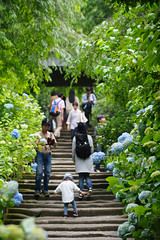 20160528-D7-DS7_2992.jpg (d3_plus) Tags: street sky plant flower building history nature japan temple nikon scenery shrine kamakura daily architectural telephoto bloom  tele streetphoto nikkor   tamron    shintoshrine  buddhisttemple dailyphoto sanctuary 28300mm   thesedays kitakamakura   28300     holyplace historicmonuments tamron28300mm  ancientcity   tamronaf28300mmf3563    a061  architecturalstructure telezoomlens d700  tamronaf28300mmf3563xrdildasphericalif nikond700   a061n