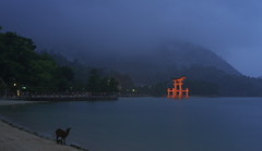 (tyodai) Tags: light up japan shrine sony deer miyajima    a7 itsukushima   hirosima  7  ilce7 sel5518z sel55f18z