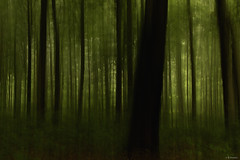 """""""lost forest"""" (B.Graulus) Tags: trees abstract nature monochrome forest landscape photography bomen woods fotografie belgium natuur bos canon600d"""