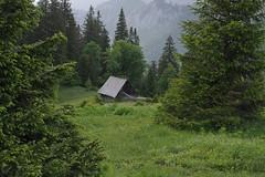 Schneealpe (Harald Reichmann) Tags: wiese gras landschaft wald steiermark fichte gebirge ahorn schneealpe baumtalhtte
