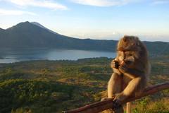 DSC02511 (Peripatete) Tags: bali mountains nature sunrise landscape volcano mount monkeys batur