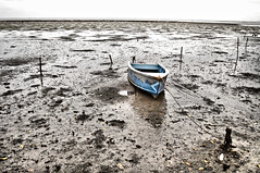 [lonely blue boat, stuck in the mud]