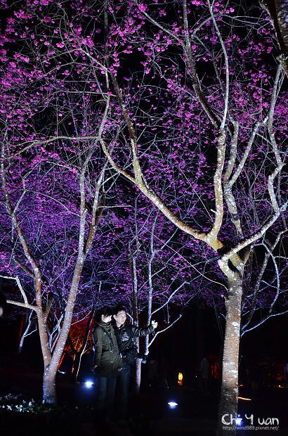 九族文化村櫻花祭11.jpg
