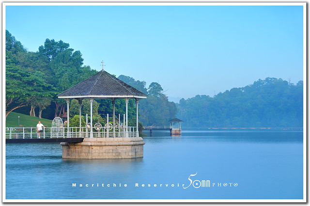 singapore macritchie reservoir - good morning