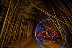 Shoots (tdub303) Tags: light japan forest painting bamboo lapp fiziks trevorwilliams2012