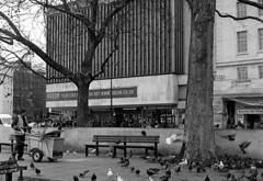 The avian underclass (Fray Bentos) Tags: london pigeons kodaktrix odeonmarblearch marblearch blackheadedgull yashica635 scavangers feralpigeons adoxaph09 tpbennettson feralbirds