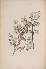 Anglų lietuvių žodynas. Žodis smooth green snake reiškia sklandžiai žalia gyvatė lietuviškai.