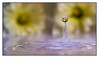 IMG_0317-2.jpg (Michael Greenley) Tags: macro reflection water canon waterdrop drop frozenwater waterdropmacro watermacro waterdropreflection canon5dmkii 5dmkii