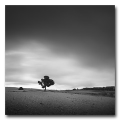 (jose.singla) Tags: light shadow sky bw españa white black tree byn blanco canon landscape luces negro sigma paisaje minimal murcia cielo árbol minimalismo 1020 sombras 50d josesingla joseantoniogimenez