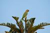 IMG_6828L4 (Sharad Medhavi) Tags: bird canonef100400mmf4556lisusm canoneod50d birdsandbeesoflakeshorehomes