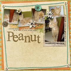 Peanut the Cat (angel85qcca) Tags: load15