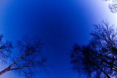 Evening Stars (baumbaTz) Tags: trees sky canon germany stars deutschland rebel evening abend kiss himmel fisheye 8mm bume walimex stade sterne x3 niedersachsen 500d samyang Astrometrydotnet:status=failed t1i bargstedt Astrometrydotnet:id=alpha20120290431662