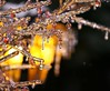 Crystal Jewels In Nature (bigbrowneyez) Tags: winter light red ice nature beautiful yellow sparkles silver golden frozen shiny crystals berries dof bright bokeh branches jewels icicles breathtaking shimmer flickrgold crystaljewelsinnature