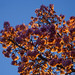 Streetlight Tree At Sunset