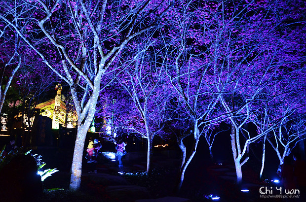 九族文化村櫻花祭13.jpg