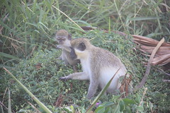 "Primates • <a style=""font-size:0.8em;"" href=""http://www.flickr.com/photos/57634067@N04/6929350523/"" target=""_blank"">View on Flickr</a>"