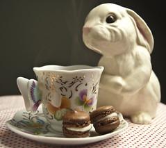 bunny tea (Horno Magico) Tags: bunny bunnies cookies garden easter ceramic french dessert spring tea butterflies rabbits porcelain teaparty frosting macarons bunnyfigurine easterrecipes february2012foodphotographyfoodphotographymilwaukee