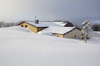 Neige immaculée  -  Spotless snow