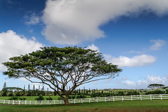 Tree and a Fence (Ron Scubadiver's Wild Life) Tags: landscape rural clouds sky kauai hawaii nikon outdoor
