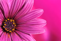 Pink Dream! (Glowing Star) Tags: pink flower rbg royalbotanicalgarden superaplus aplusphoto