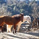 "Ponies <a style=""margin-left:10px; font-size:0.8em;"" href=""http://www.flickr.com/photos/14315427@N00/6989073319/"" target=""_blank"">@flickr</a>"