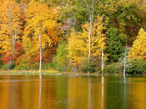 Yellow Tree Reflections