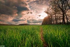 Path Through the Grass (bmillerx94) Tags: sunset nature may april beautifiul