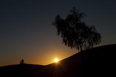 _DSC0330 (deborahmocci) Tags: africa people sahara village desert market south palm morocco arabian kasbah