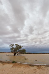 IMG_1470 (Melissa Macgill) Tags: cloud tree lakes outback sa southaustralia coongie