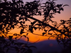 Sunset 20140801 (caligula1995) Tags: sunset plumtree 2014