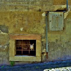 gato (archifra -francesco de vincenzi-) Tags: cat chat italia finestra gato gatto tubo micio molise isernia grata venafro urbandetail regnodinapoli archifraisernia francescodevincenzi
