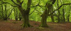 Guardians of the Forest (J McSporran) Tags: trees landscape scotland woodlands callander bracklinn canon6d