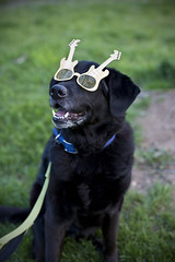 Tucker (Metro Tiff) Tags: birthday music dog canine shades