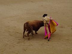 Veronica (franmunozr) Tags: rey albero corrida cuernos toro monumental picador torero plazadetoros ganaderia cardeno coso lasventas divisa ruedo banderilla torobravo