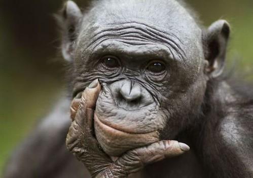 El sexo y los bonobos