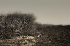 Dunes (Pieter Musterd) Tags: holland nature photoshop canon dunes nederland thenetherlands natuur denhaag 5d duinen thehague kijkduin sgravenhage musterd westduinpark colorefexpro pietermusterd canon5dmarkii