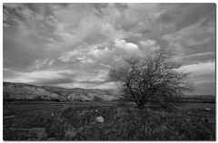 Wuthering heights (Chris Odchigue | Photography) Tags: california county bw tree clouds canon landscape eos canyon kern valley lone usm kpa efs 1022mm bakersfield monchrome 50d 3545