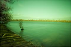 Undaunted (Arpicheck) Tags: longexposure shadow tree clouds river duna donau longexpo weldingglass daube