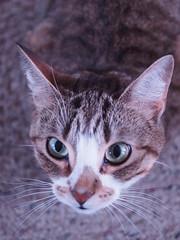 Curious Nala (Robbyadam) Tags: cute cat kitty nala ep3 robbyadam