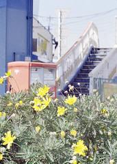 1570-B (yarzyarth) Tags: film olympus  40mm zuiko  kodakgold penf