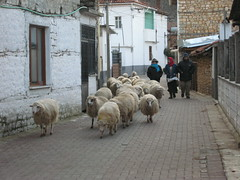 Animals on the main street of village Lin, Albania
