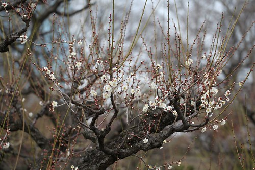 春遠からじ~