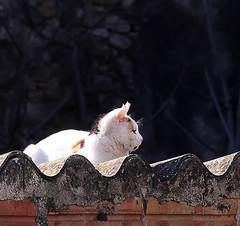 LA GATA DE CISTELLA (beagle34) Tags: girona gato gata catalunya gat 76 empord altempord cistella