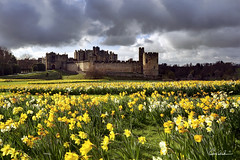 Alnwick Castle (Chris Lishman) Tags: park uk sky castle yellow canon landscape spring harrypotter historic alnwick northumberland hogwarts narcissi daffodils alnwickcastle movielocation lishman springcolour chrislishman welcomeuk