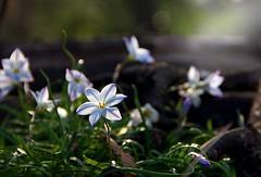 you are my sunshine (megscapturedtreasures) Tags: sun flower grass sunshine mine ray little wildflowers backlit blooms prof sunbeam soe greatphotographers mygearandme mygearandmepremium